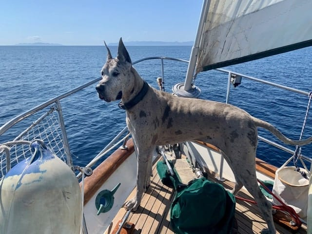 Boat dogs! A guide to cruising with your canine